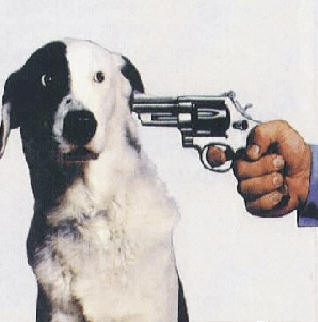 Shoot the Dog.jpg