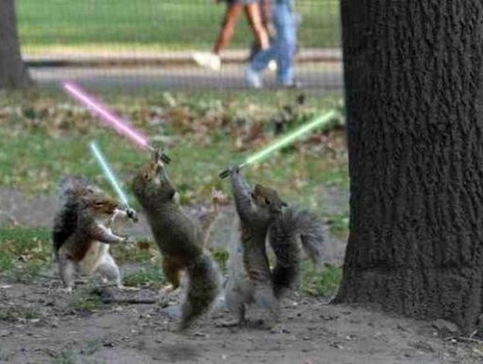 Jedi Squirrels.jpg