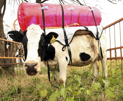 cowfart.jpg